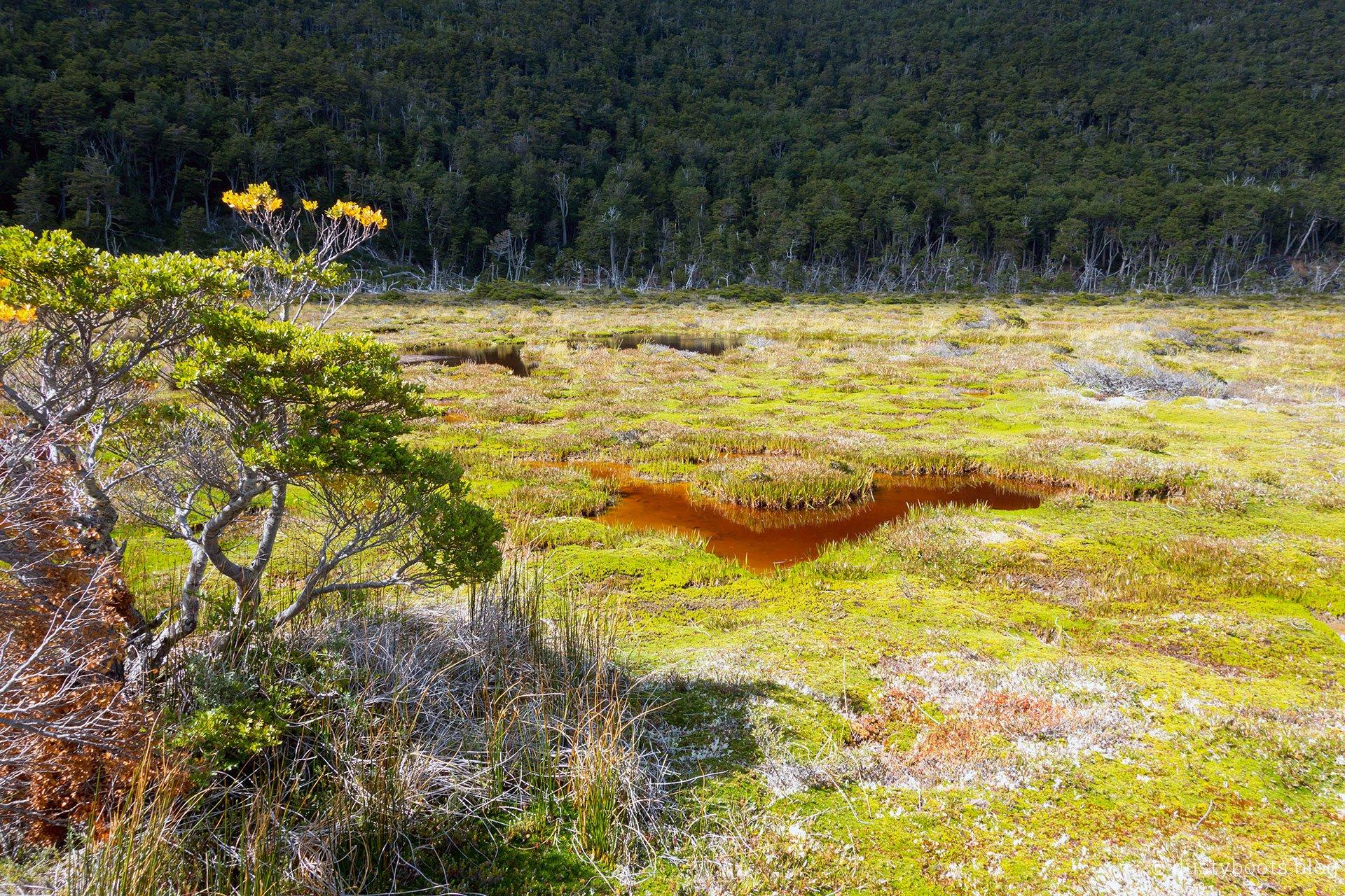 Moorlandschaft kurz vorm Lago Windhond
